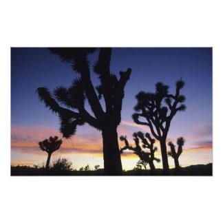 USA, California, Joshua Tree National Park, Photo Print