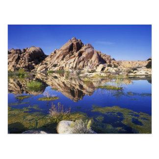 USA California Joshua Tree National Park Postcards