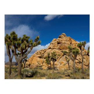 USA California Joshua Tree National Park Post Cards