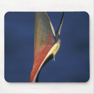 USA, California, La Jolla. Side view of brown Mouse Pad