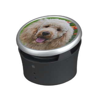 USA, California. Labradoodle Looking At You Bluetooth Speaker