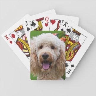 USA, California. Labradoodle Looking At You Card Decks