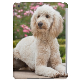 USA, California. Labradoodle Lying By Fountain iPad Air Cover