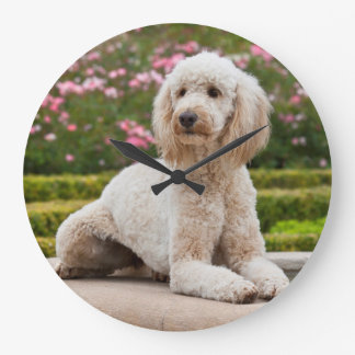 USA, California. Labradoodle Lying By Fountain Large Clock