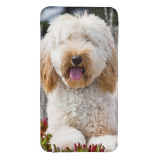 USA, California. Labradoodle Lying In Ice Plant Galaxy S4 Pouch