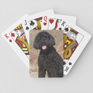 USA, California. Labradoodle Sitting Playing Cards
