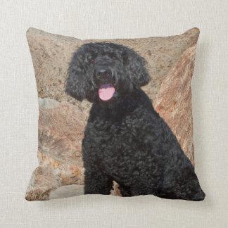 USA, California. Labradoodle Sitting Throw Pillow