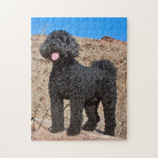 USA, California. Labradoodle Standing Jigsaw Puzzle