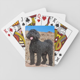 USA, California. Labradoodle Standing Playing Cards