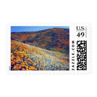 USA, California, Lake Elsinore. Poppies and Stamp