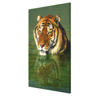 USA, California, Los Angeles County. Bengal Canvas Print