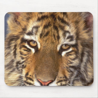 USA, California, Los Angeles County. Portrait 2 Mouse Pad