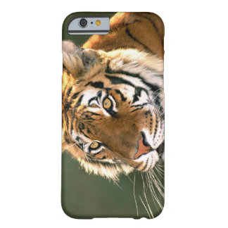 USA, California, Los Angeles County. Portrait 5 Barely There iPhone 6 Case