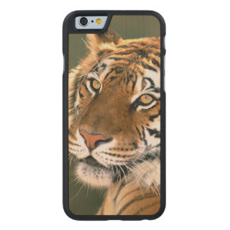 USA, California, Los Angeles County. Portrait 5 Carved Maple iPhone 6 Slim Case
