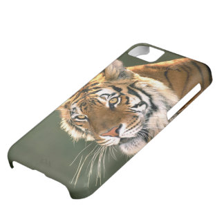 USA, California, Los Angeles County. Portrait 5 Cover For iPhone 5C