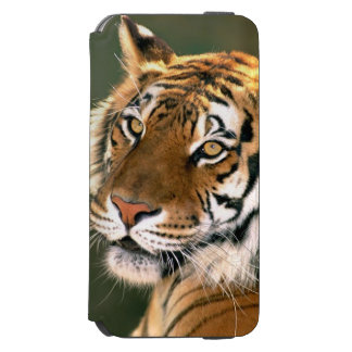 USA, California, Los Angeles County. Portrait 5 iPhone 6/6s Wallet Case