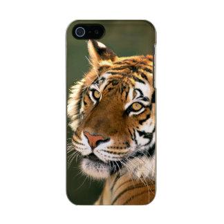 USA, California, Los Angeles County. Portrait 5 Metallic iPhone SE/5/5s Case