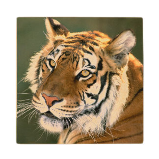 USA, California, Los Angeles County. Portrait 5 Wood Coaster