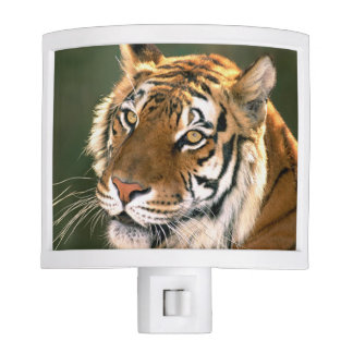 USA, California, Los Angeles County. Portrait 5 Night Light