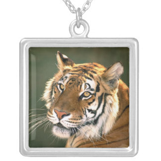 USA, California, Los Angeles County. Portrait 5 Silver Plated Necklace
