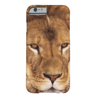 USA, California, Los Angeles County. Portrait Barely There iPhone 6 Case