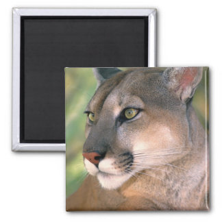 USA, California, Los Angeles County. Portrait of 2 Inch Square Magnet