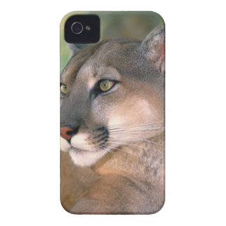 USA, California, Los Angeles County. Portrait of Case-Mate iPhone 4 Cases