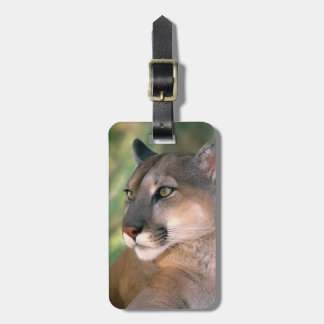 USA, California, Los Angeles County. Portrait of Luggage Tag