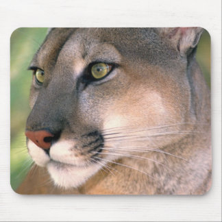USA, California, Los Angeles County. Portrait of Mouse Pad
