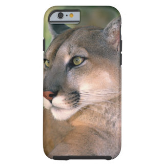 USA, California, Los Angeles County. Portrait of Tough iPhone 6 Case