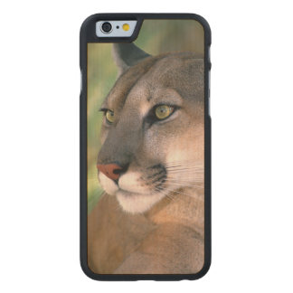 USA, California, Los Angeles County. Portrait of Carved® Maple iPhone 6 Slim Case