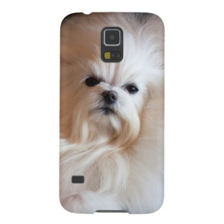 USA, California. Maltese Lying Down Galaxy S5 Case