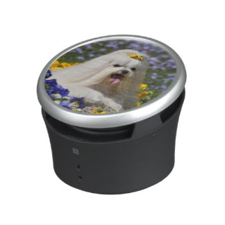 USA, California. Maltese Lying In Flowers Bluetooth Speaker