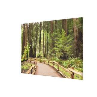 USA, California, Marin County, Muir Woods Stretched Canvas Print
