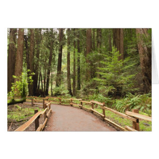 USA, California, Marin County, Muir Woods Card