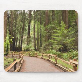 USA, California, Marin County, Muir Woods Mouse Pad