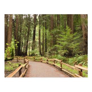 USA, California, Marin County, Muir Woods Postcards