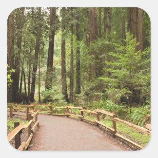 USA, California, Marin County, Muir Woods Square Sticker