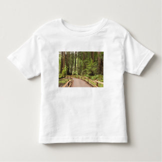 USA, California, Marin County, Muir Woods T Shirt