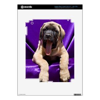 USA, California. Mastiff Puppy In Purple iPad 3 Decals