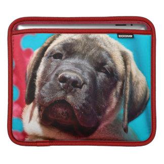 USA, California. Mastiff Puppy Looking At You iPad Sleeves