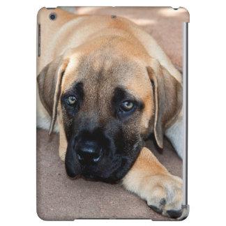 USA, California. Mastiff Puppy Lying On Cement Case For iPad Air