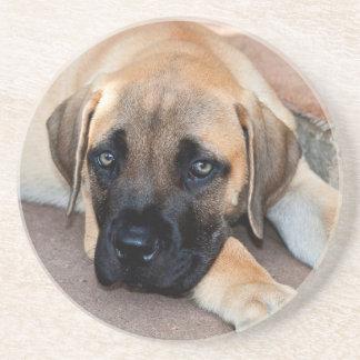 USA, California. Mastiff Puppy Lying On Cement Drink Coaster