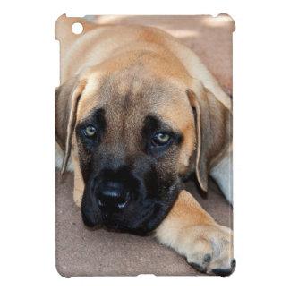 USA, California. Mastiff Puppy Lying On Cement iPad Mini Cases