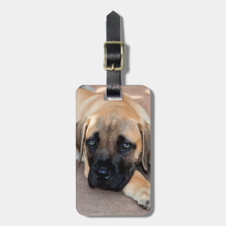 USA, California. Mastiff Puppy Lying On Cement Luggage Tag