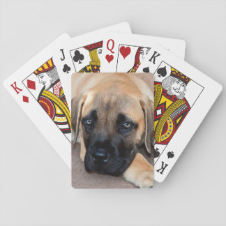 USA, California. Mastiff Puppy Lying On Cement Playing Cards