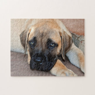USA California Mastiff Puppy Lying On Cement Puzzles