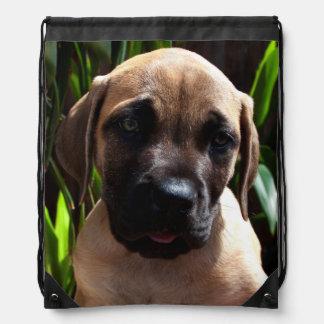 USA, California. Mastiff Puppy Portrait 2 Drawstring Backpack