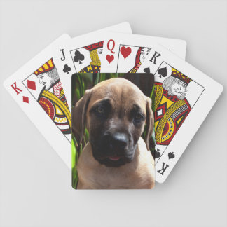 USA, California. Mastiff Puppy Portrait 2 Poker Cards