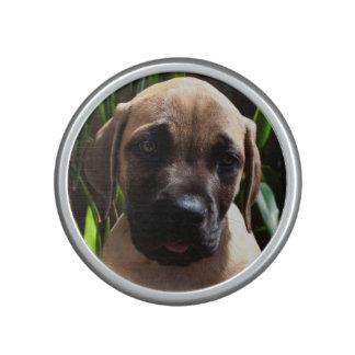 USA, California. Mastiff Puppy Portrait 2 Speaker